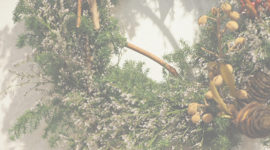 『Little Forests』 -Wreaths & Swags-